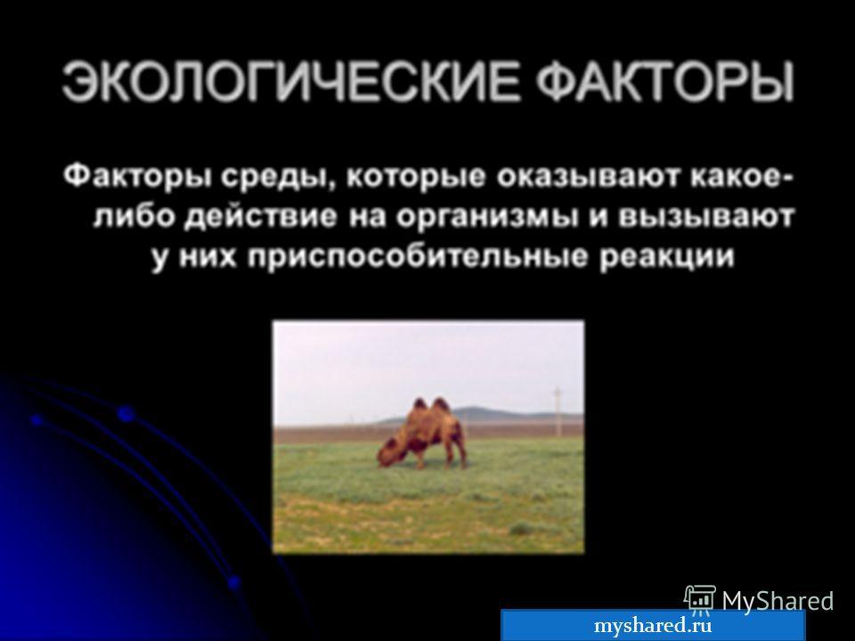 Любые свойства или компоненты окружающей среды, оказывающие влияние на организмы, называют экологическими факторами. myshared.ru
