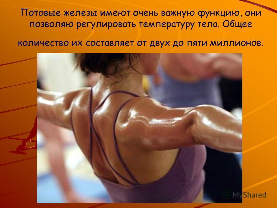 Потовые железы имеют очень важную функцию, они позволяю регулировать температуру тела. Общее количество их составляет от двух до пяти миллионов.