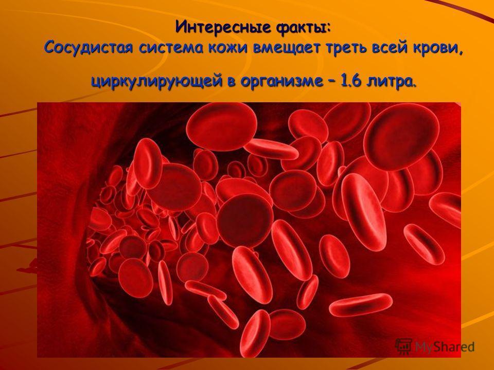 Интересные факты: Сосудистая система кожи вмещает треть всей крови, циркулирующей в организме – 1.6 литра.