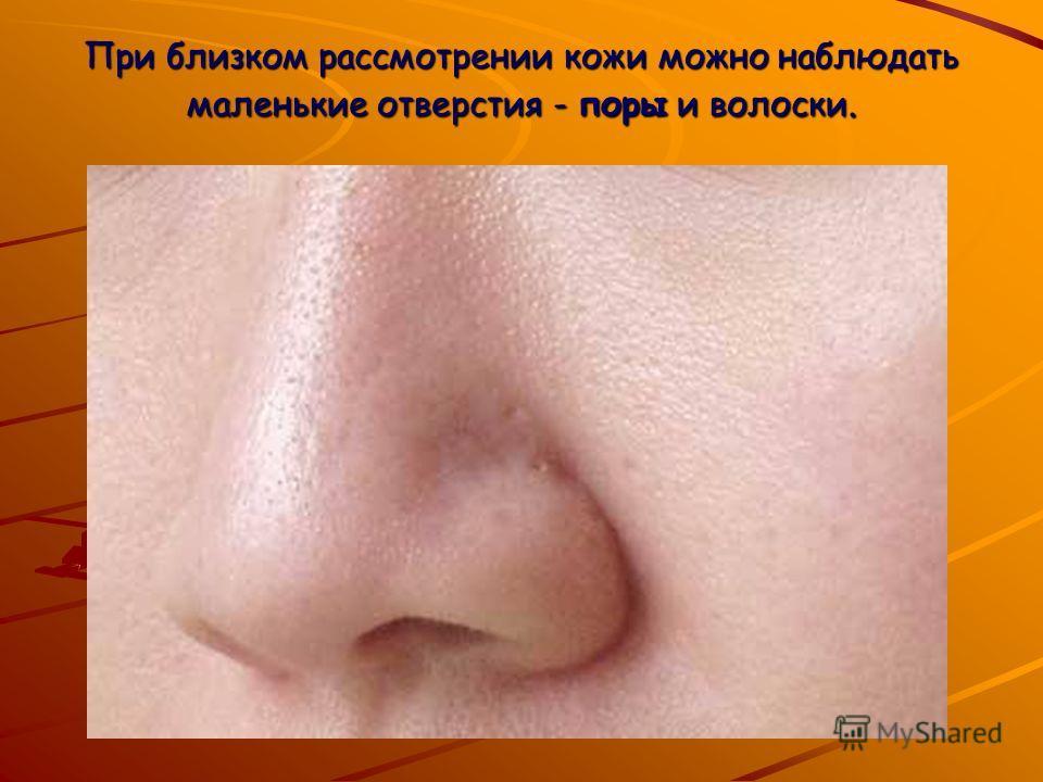 При близком рассмотрении кожи можно наблюдать маленькие отверстия - поры и волоски.