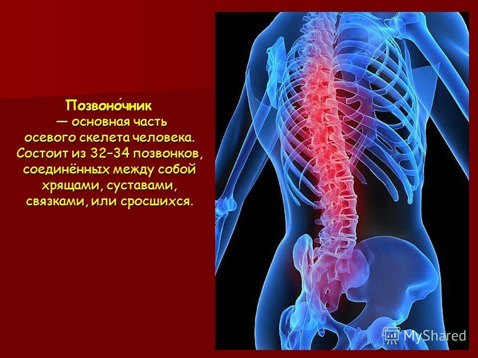 Позвоночник основная часть осевого скелета человека. Состоит из 32–34 позвонков, соединённых между собой хрящами, суставами, связками, или сросшихся.