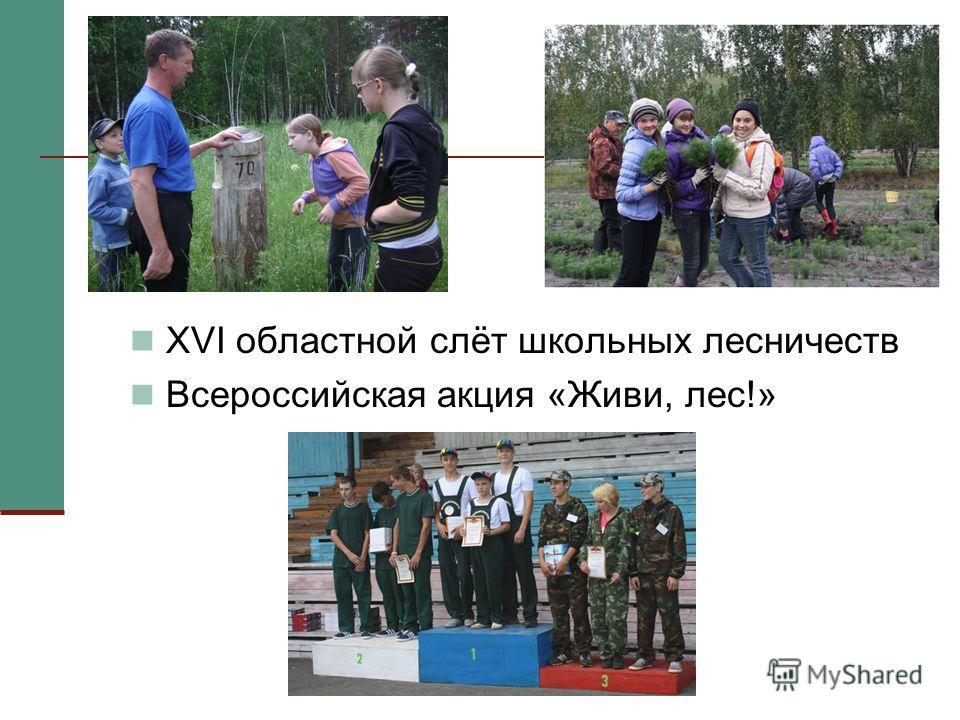 XVI областной слёт школьных лесничеств Всероссийская акция «Живи, лес!»
