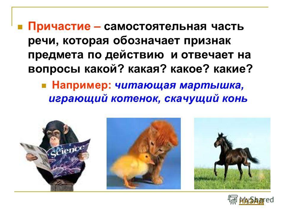 Причастие – самостоятельная часть речи, которая обозначает признак предмета по действию и отвечает на вопросы какой? какая? какое? какие? Например: читающая мартышка, играющий котенок, скачущий конь НАЗАД
