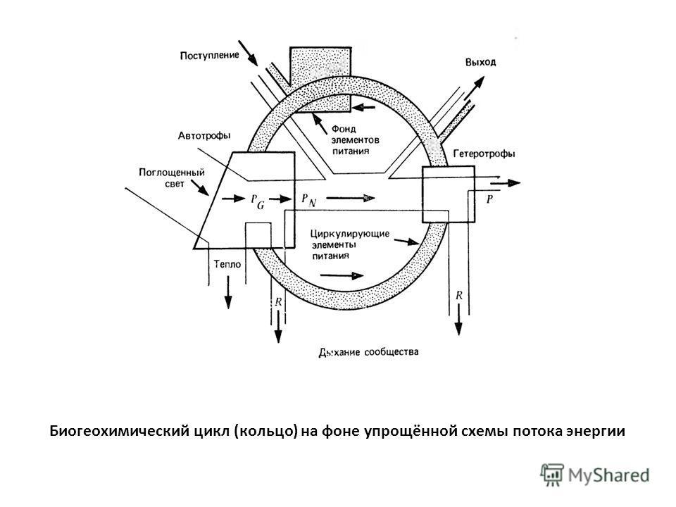 Биогеохимический цикл (кольцо) на фоне упрощённой схемы потока энергии