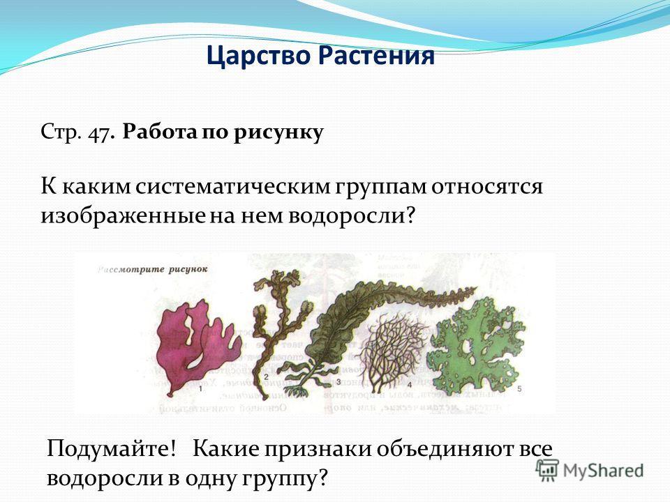 Царство Растения Стр. 47. Работа по рисунку К каким систематическим группам относятся изображенные на нем водоросли? Подумайте! Какие признаки объединяют все водоросли в одну группу?