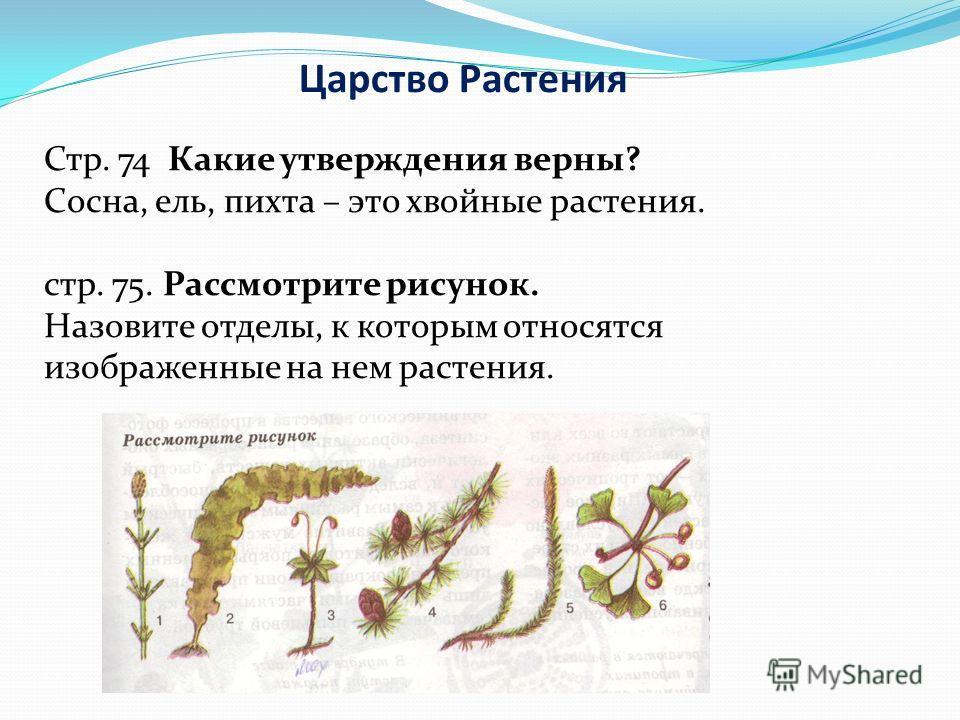 Царство Растения Стр. 74 Какие утверждения верны? Сосна, ель, пихта – это хвойные растения. стр. 75. Рассмотрите рисунок. Назовите отделы, к которым относятся изображенные на нем растения.