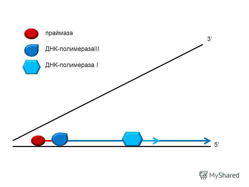 праймаза ДНК-полимеразаIII ДНК-полимераза I 5 3