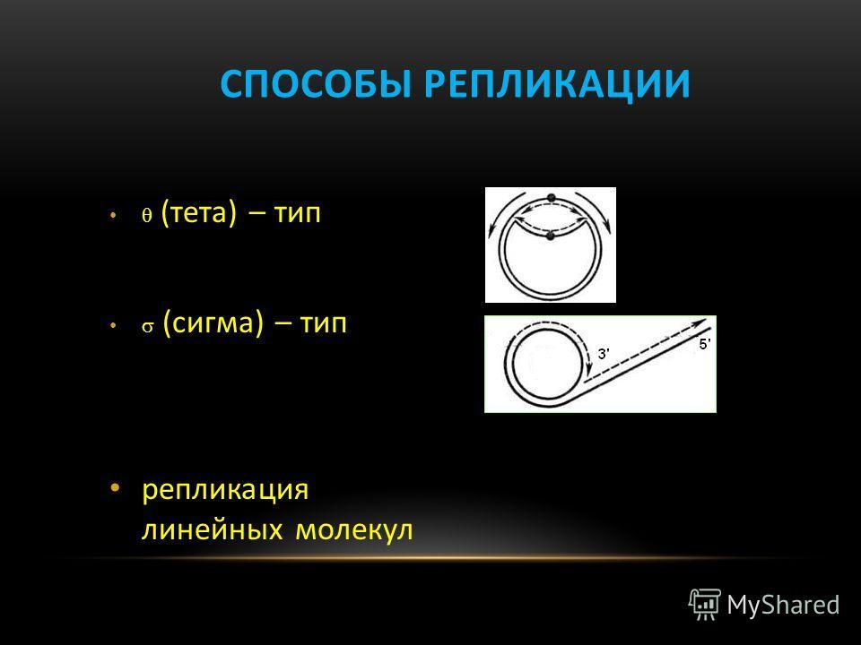 СПОСОБЫ РЕПЛИКАЦИИ (тета) – тип (сигма) – тип репликация линейных молекул