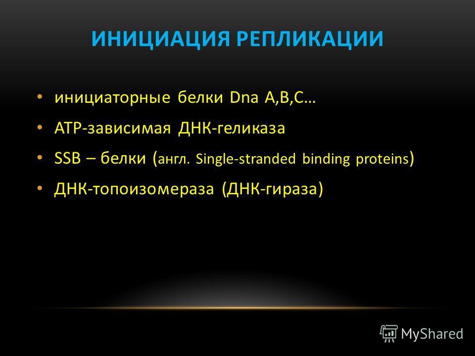ИНИЦИАЦИЯ РЕПЛИКАЦИИ инициаторные белки Dna A,В,С… АТР-зависимая ДНК-геликаза SSB – белки ( англ. Single-stranded binding proteins ) ДНК-топоизомераза (ДНК-гираза)