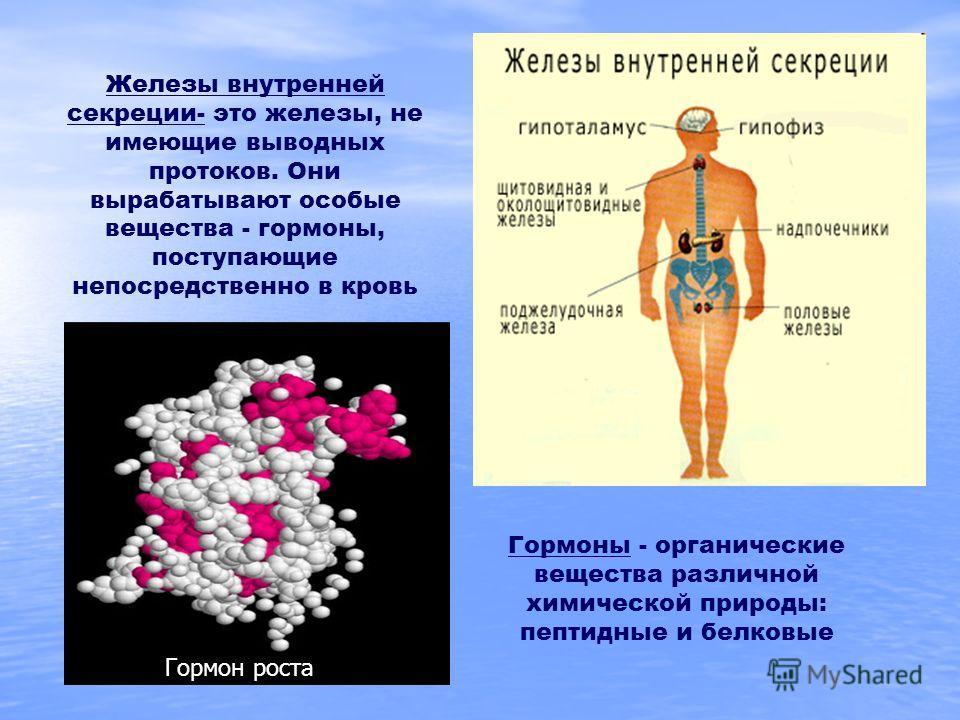 Железы внутренней секреции- это железы, не имеющие выводных протоков. Они вырабатывают особые вещества - гормоны, поступающие непосредственно в кровь Гормоны - органические вещества различной химической природы: пептидные и белковые Гормон роста