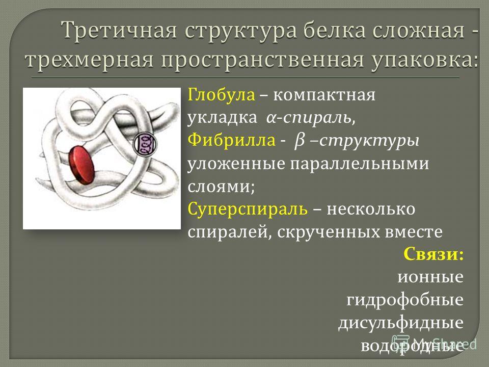 Глобула – компактная укладка α-спираль, Фибрилла - β –структуры уложенные параллельными слоями ; Суперспираль – несколько спиралей, скрученных вместе Связи: ионные гидрофобные дисульфидные водородные