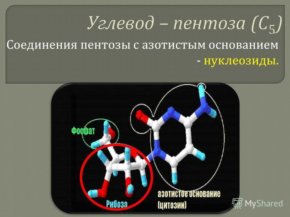 Соединения пентозы с азотистым основанием - нуклеозиды.