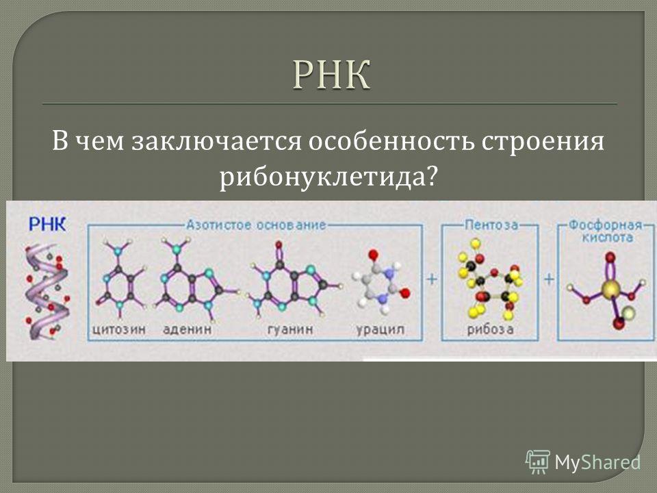 В чем заключается особенность строения рибонуклетида ?