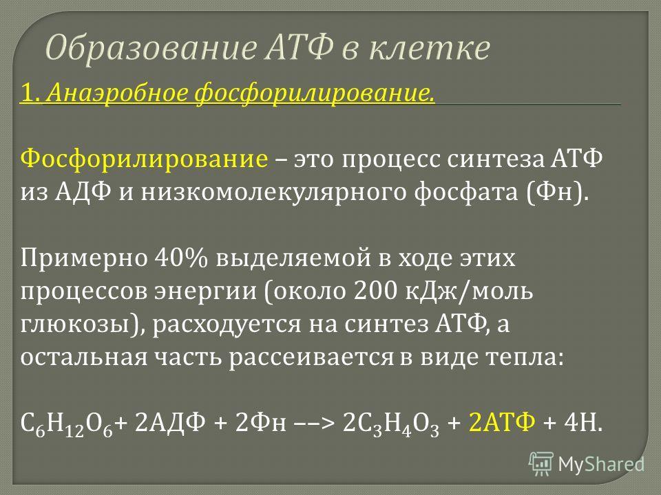 1. Анаэробное фосфорилирование. Фосфорилирование – это процесс синтеза АТФ из АДФ и низкомолекулярного фосфата ( Фн ). Примерно 40% выделяемой в ходе этих процессов энергии ( около 200 кДж / моль глюкозы ), расходуется на синтез АТФ, а остальная част