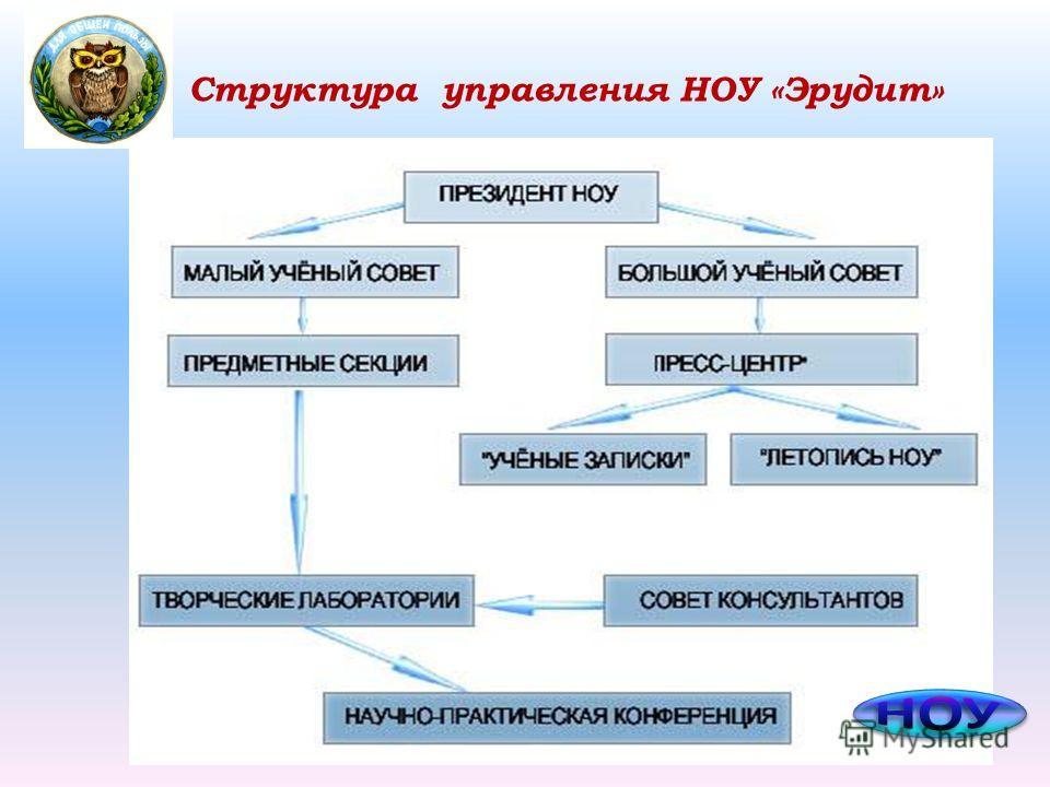 Структура управления НОУ «Эрудит»