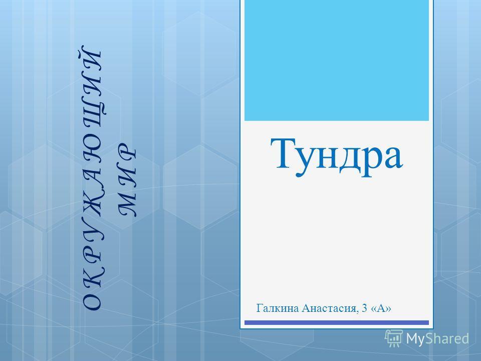 Тундра Галкина Анастасия, 3 «А» ОКРУЖАЮЩИЙ МИР