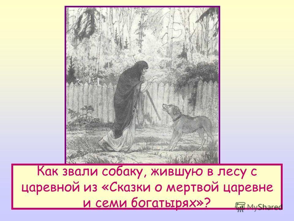 Как звали собаку, жившую в лесу с царевной из «Сказки о мертвой царевне и семи богатырях»?