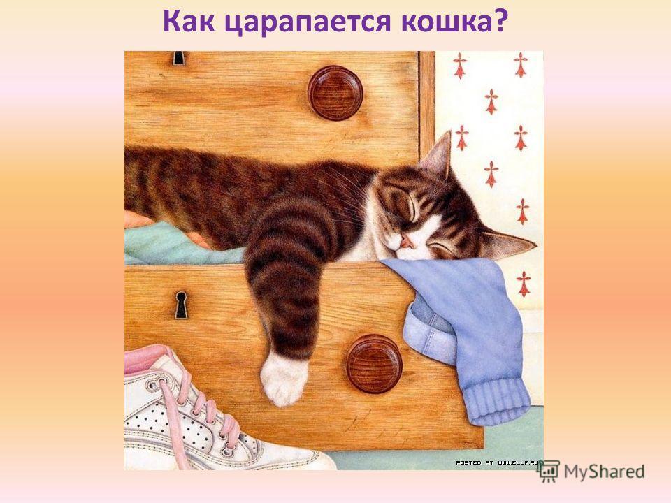 Как царапается кошка?