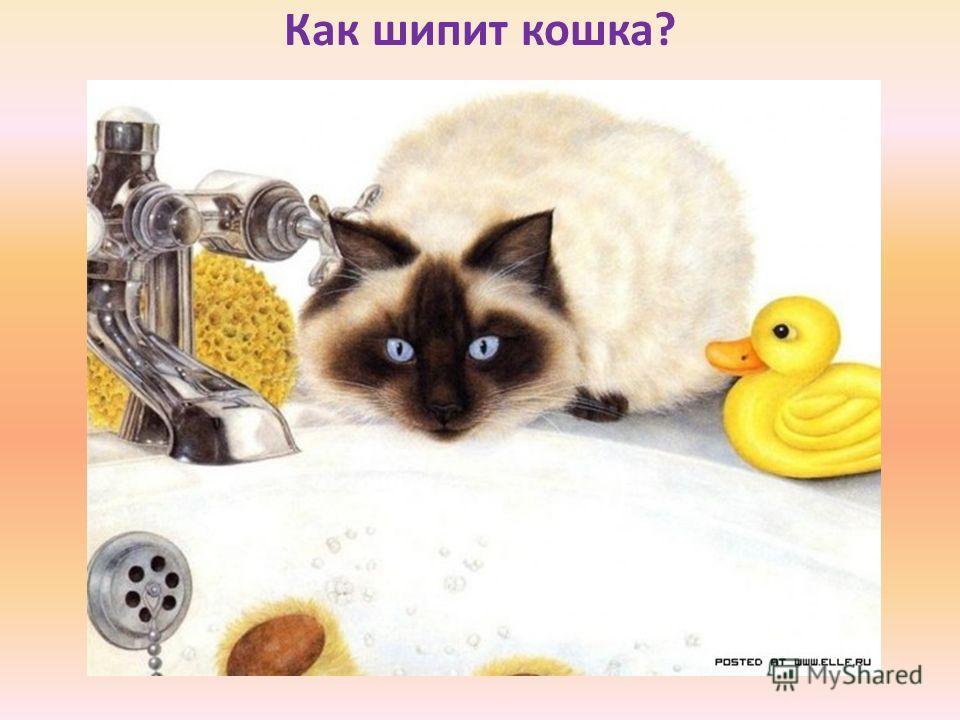 Как шипит кошка?