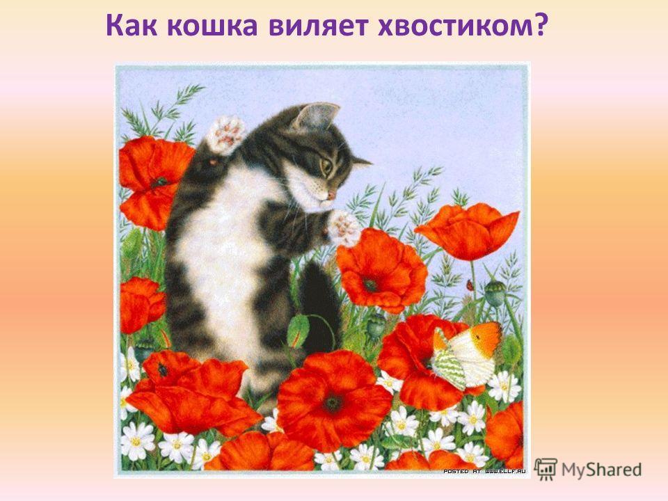 Как кошка виляет хвостиком?