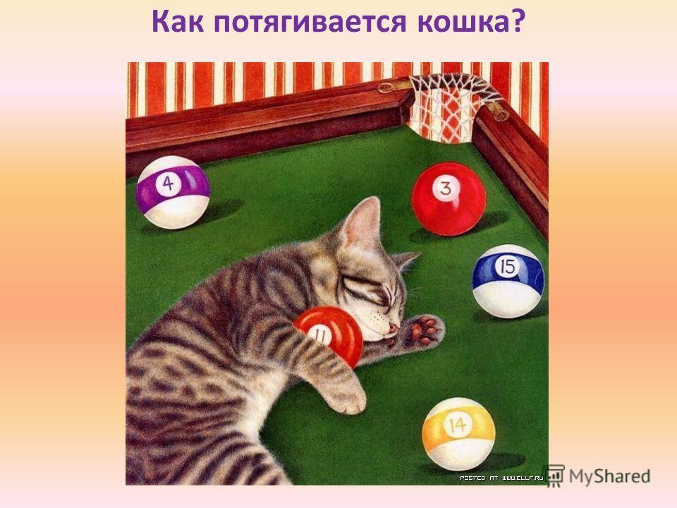 Как потягивается кошка?