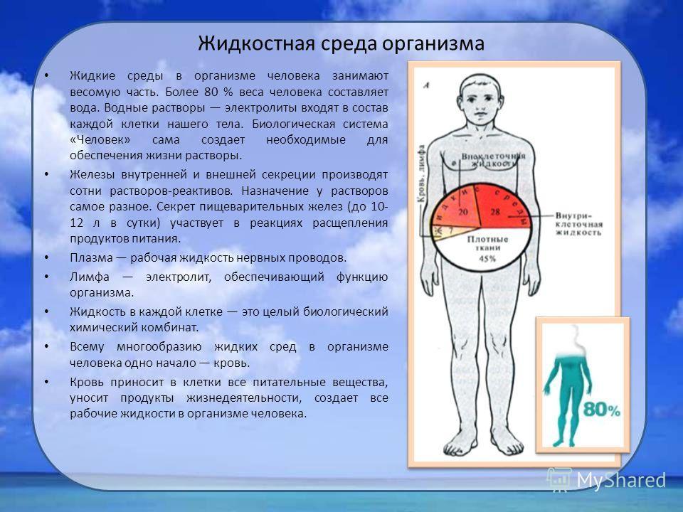 Жидкостная среда организма Жидкие среды в организме человека занимают весомую часть. Более 80 % веса человека составляет вода. Водные растворы электролиты входят в состав каждой клетки нашего тела. Биологическая система «Человек» сама создает необход
