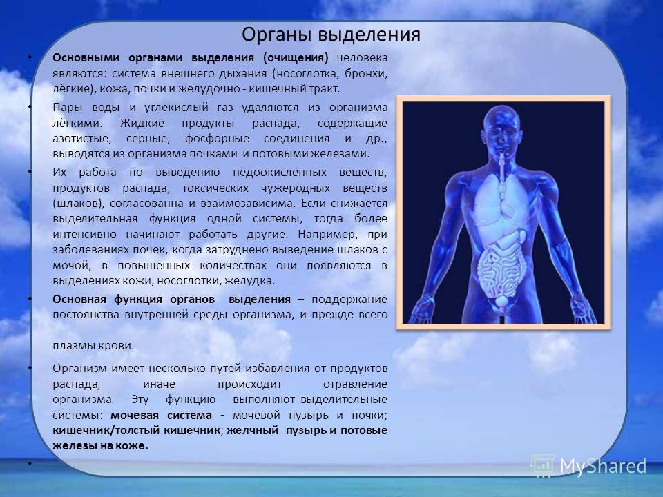 Органы выделения Основными органами выделения (очищения) человека являются: система внешнего дыхания (носоглотка, бронхи, лёгкие), кожа, почки и желудочно - кишечный тракт. Пары воды и углекислый газ удаляются из организма лёгкими. Жидкие продукты ра