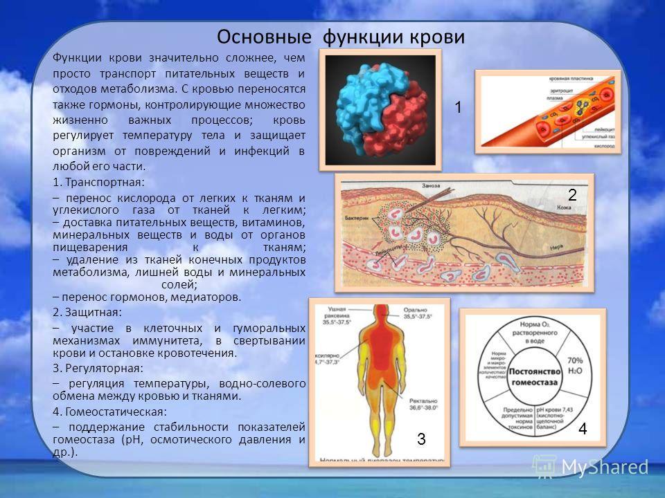 Основные функции крови Функции крови значительно сложнее, чем просто транспорт питательных веществ и отходов метаболизма. С кровью переносятся также гормоны, контролирующие множество жизненно важных процессов; кровь регулирует температуру тела и защи