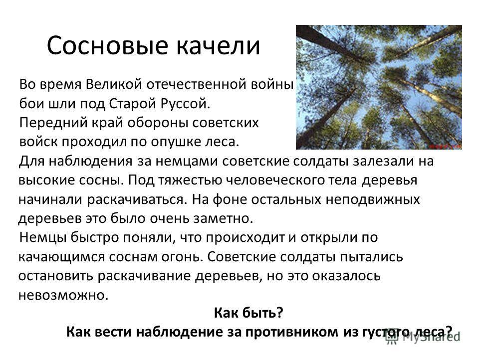 Сосновые качели Во время Великой отечественной войны бои шли под Старой Руссой. Передний край обороны советских войск проходил по опушке леса. Для наблюдения за немцами советские солдаты залезали на высокие сосны. Под тяжестью человеческого тела дере