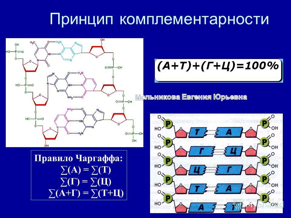 8 Принцип комплементарности Правило Чаргаффа: (А) = (Т) (Г) = (Ц) (А+Г) = (Т+Ц)
