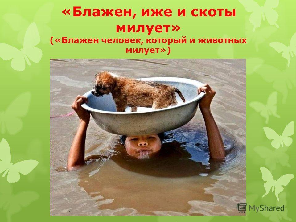 «Блажен, иже и скоты милует» («Блажен человек, который и животных милует»)