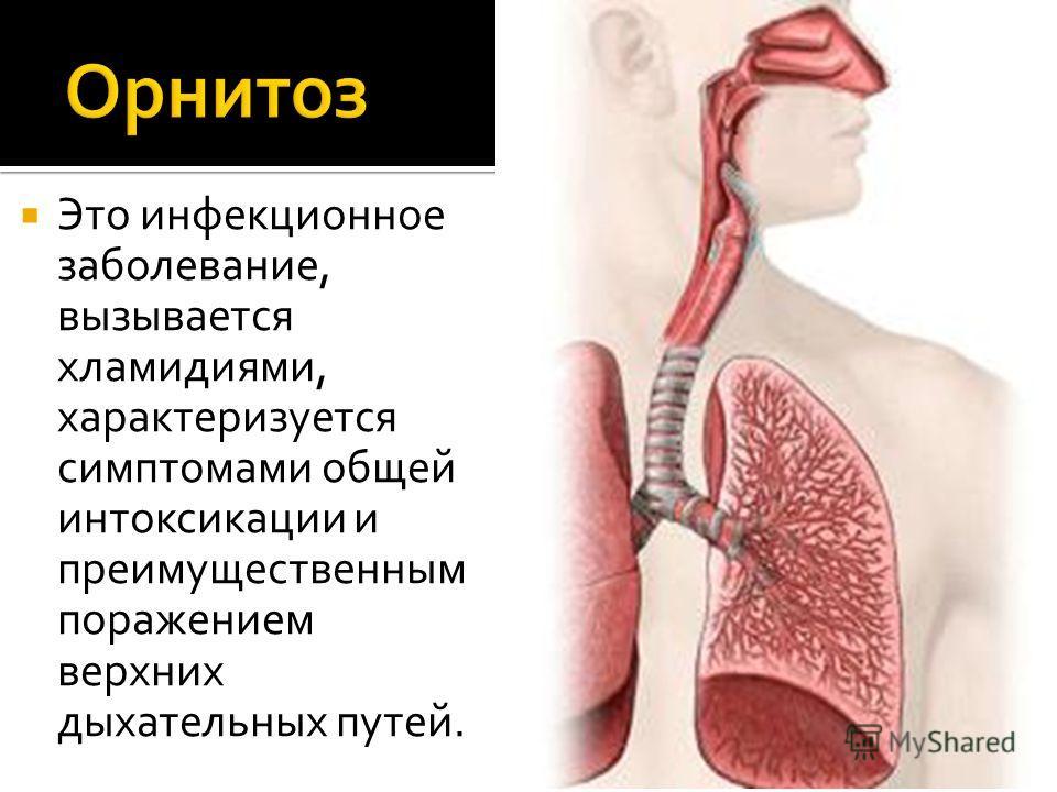 Это инфекционное заболевание, вызывается хламидиями, характеризуется симптомами общей интоксикации и преимущественным поражением верхних дыхательных путей.