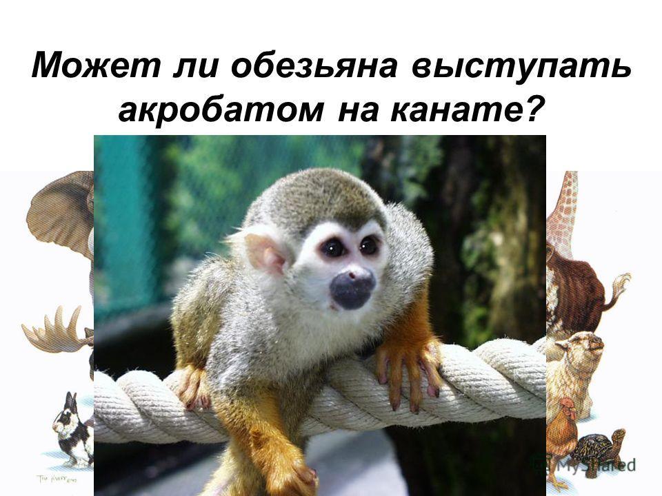 Может ли обезьяна выступать акробатом на канате?