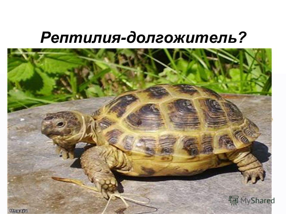 Рептилия-долгожитель?
