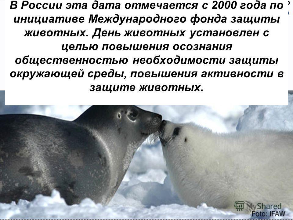 В России эта дата отмечается с 2000 года по инициативе Международного фонда защиты животных. День животных установлен с целью повышения осознания общественностью необходимости защиты окружающей среды, повышения активности в защите животных.