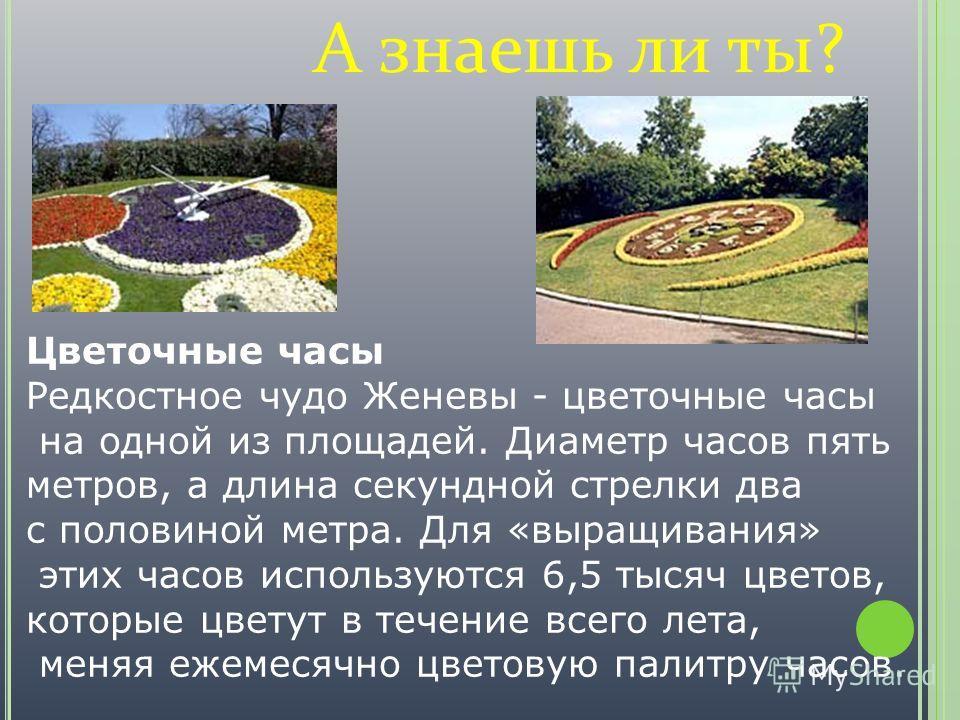 А знаешь ли ты? Цветочные часы Редкостное чудо Женевы - цветочные часы на одной из площадей. Диаметр часов пять метров, а длина секундной стрелки два с половиной метра. Для «выращивания» этих часов используются 6,5 тысяч цветов, которые цветут в тече