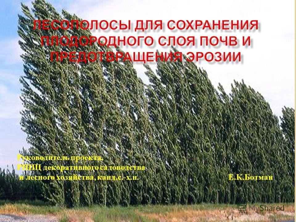 Руководитель проекта, РНПЦ декоративного садоводства и лесного хозяйства, канд. с.- х. н. Е. К. Ботман