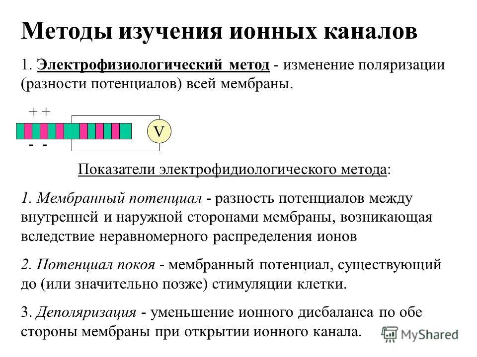 Методы изучения ионных каналов 1. Электрофизиологический метод - изменение поляризации (разности потенциалов) всей мембраны. Показатели электрофидиологического метода: 1. Мембранный потенциал - разность потенциалов между внутренней и наружной сторона