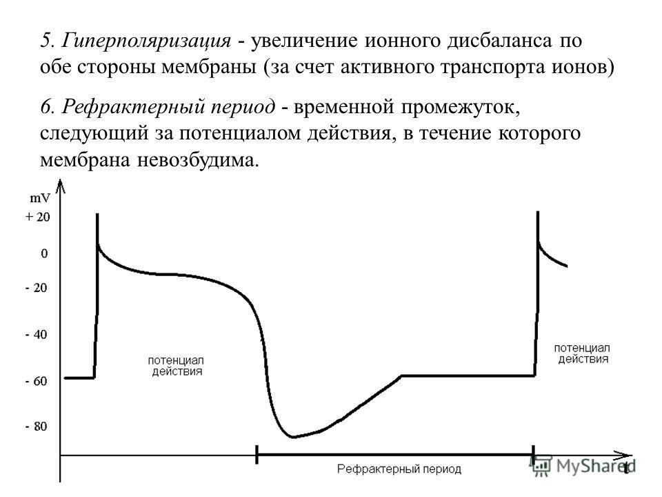 5. Гиперполяризация - увеличение ионного дисбаланса по обе стороны мембраны (за счет активного транспорта ионов) 6. Рефрактерный период - временной промежуток, следующий за потенциалом действия, в течение которого мембрана невозбудима.