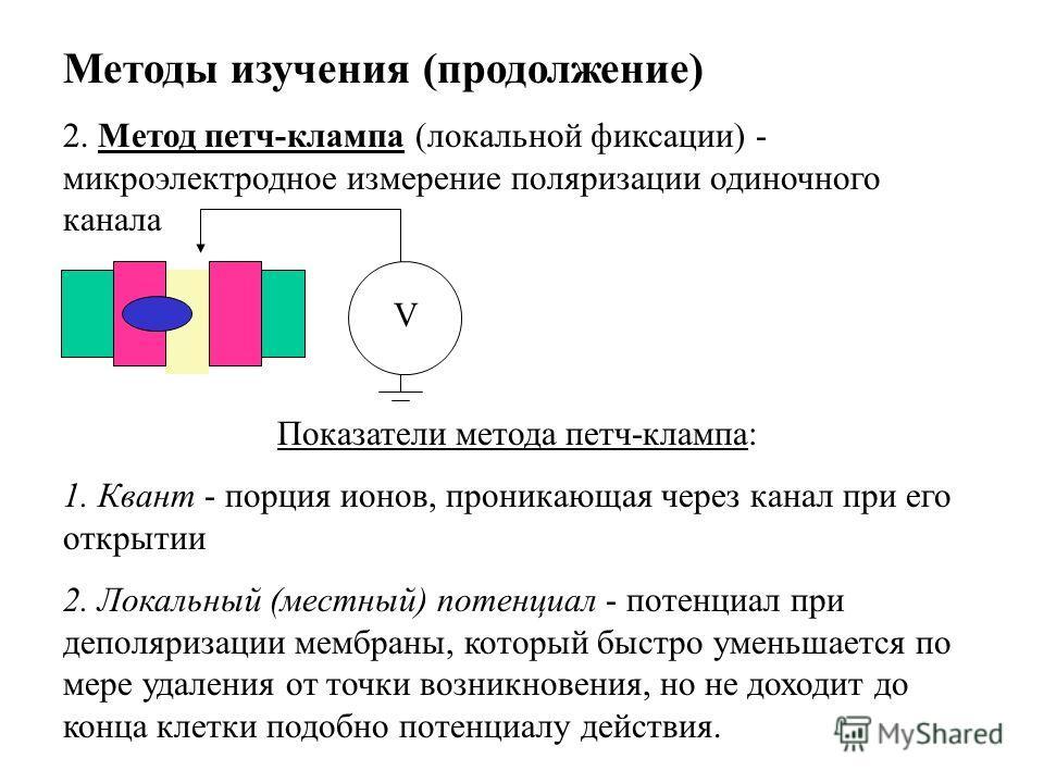 Методы изучения (продолжение) 2. Метод петч-клампа (локальной фиксации) - микроэлектродное измерение поляризации одиночного канала Показатели метода петч-клампа: 1. Квант - порция ионов, проникающая через канал при его открытии 2. Локальный (местный)