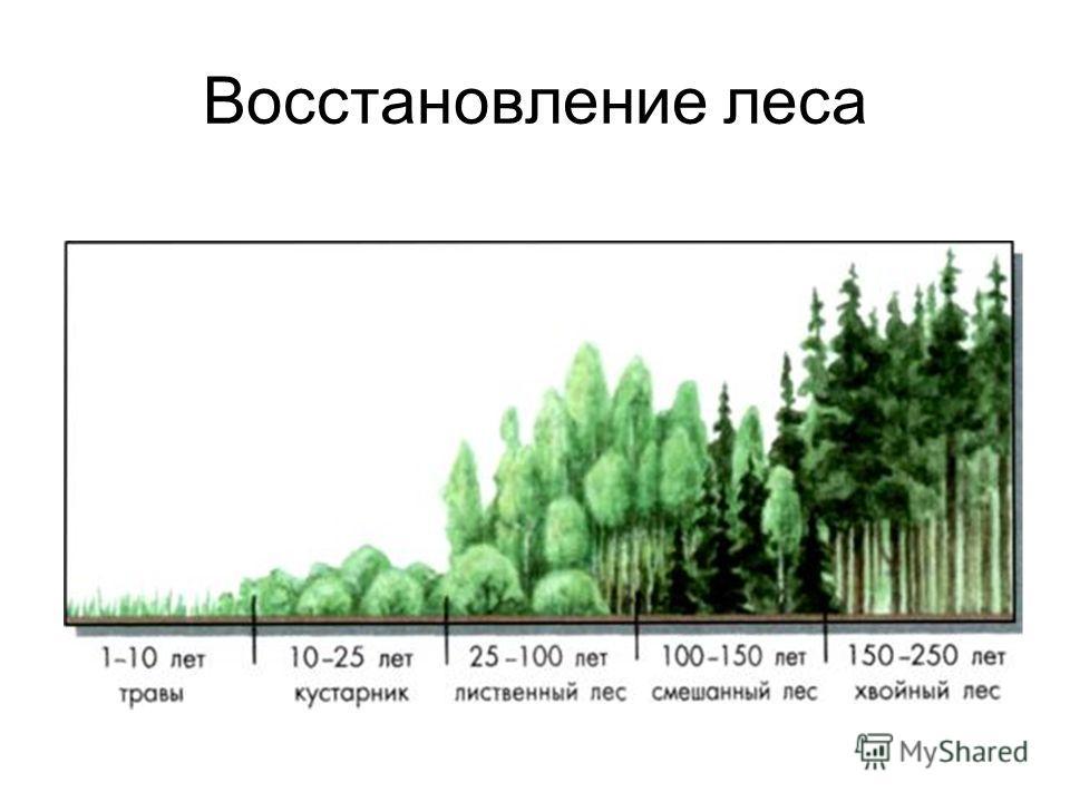 Восстановление леса