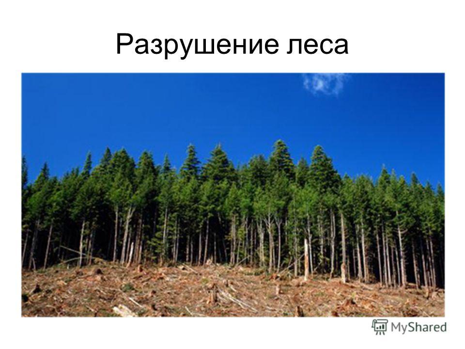 Разрушение леса
