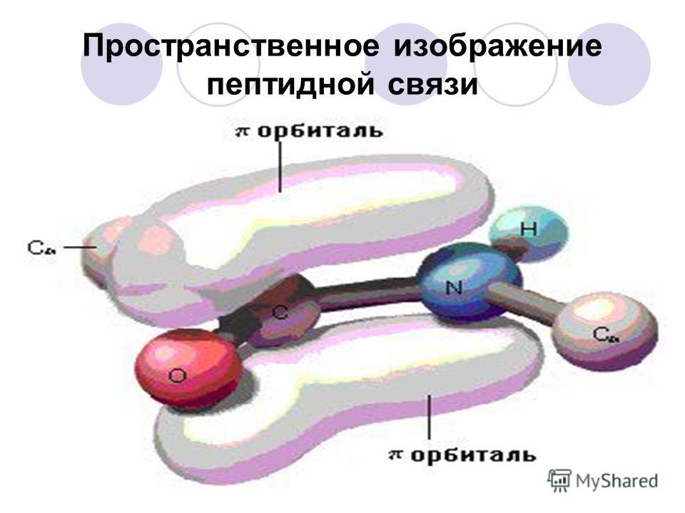 Мезомерия пептидной связи Кето- (лактимная) Енол- (лактамная)