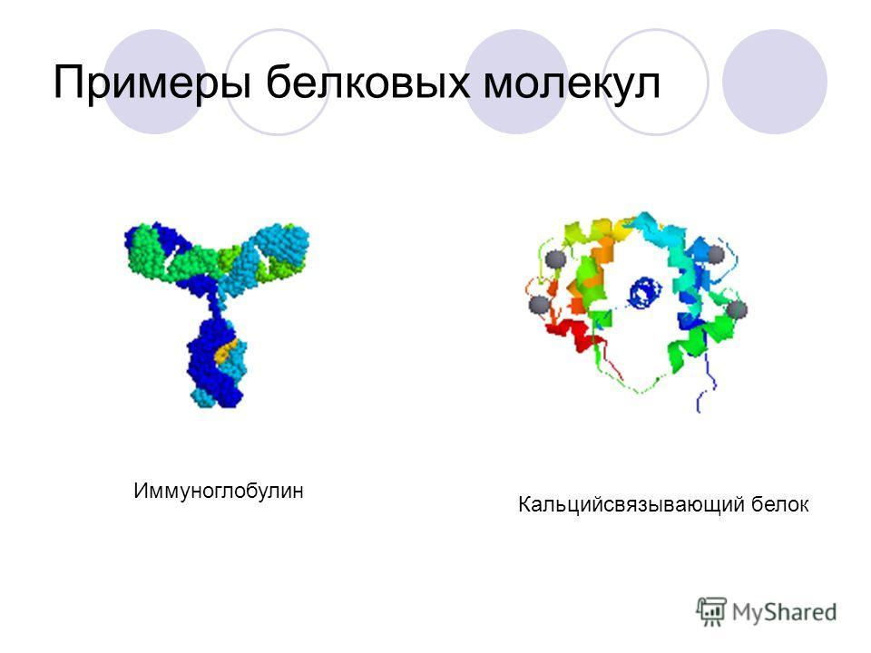 Доменная организация белка Домен - обособленная область молекулы белка, обладающая структурной и функциональной автономией. В иммуноглобулине G 1 (IgG 1 ), различают 12 доменов: 2 легкие цепи по 2 домена (V L, C L ) 2 тяжелые цепи по 4 домена (V H, C