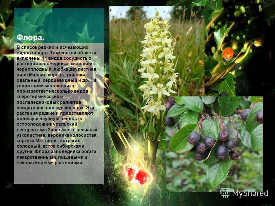 Флора. В список редких и исчезающих видов флоры Тюменской области включены 14 видов сосудистых растений заповедника: кизильник черноплодный, любка двулистная, пион Марьин корень, тайники овальный, сердцевидный и др. На территории заповедника произрас