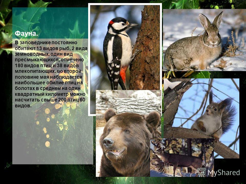Фауна. В заповеднике постоянно обитают 13 видов рыб, 2 вида земноводных, один вид пресмыкающихся, отмечено 180 видов птиц и 38 видов млекопитающих. во второй половине мая наблюдается наибольшее обилие птиц на болотах в среднем на один квадратный кило