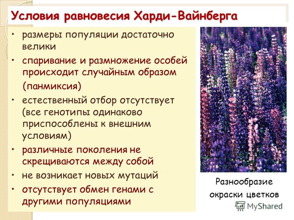 Условия равновесия Харди-Вайнберга размеры популяции достаточно велики спаривание и размножение особей происходит случайным образом (панмиксия) естественный отбор отсутствует (все генотипы одинаково приспособлены к внешним условиям) различные поколен