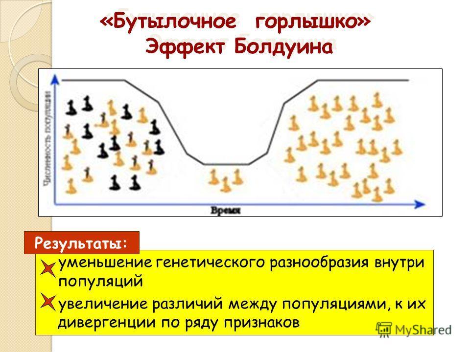 «Бутылочное горлышко» Эффект Болдуина «Бутылочное горлышко» Эффект Болдуина уменьшение генетического разнообразия внутри популяций увеличение различий между популяциями, к их дивергенции по ряду признаков Результаты: