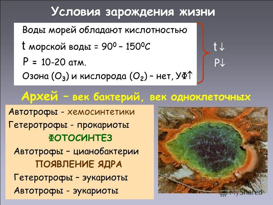 Условия зарождения жизни Воды морей обладают кислотностью t морской воды = 90 0 – 150 0 С Р = 10-20 атм. Озона (О 3 ) и кислорода (О 2 ) – нет, УФ t Р Архей – век бактерий, век одноклеточных Автотрофы - хемосинтетики Гетеротрофы - прокариоты ФОТОСИНТ