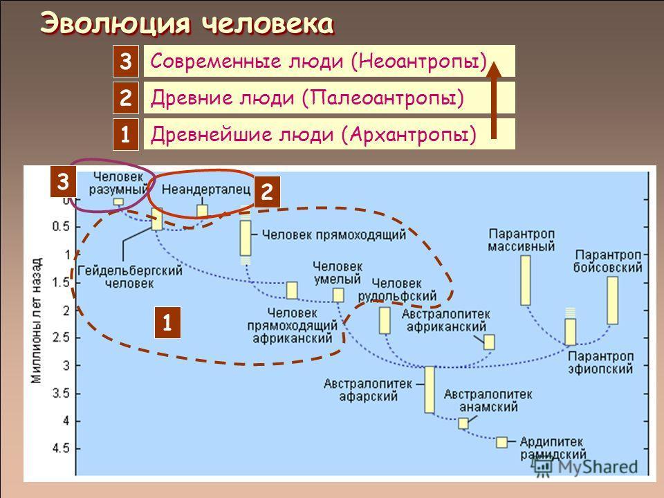 Древнейшие люди (Архантропы) Древние люди (Палеоантропы) Современные люди (Неоантропы) 1 1 2 2 3 3